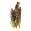 Guinea Fowl Quill 6-9'' Yellow